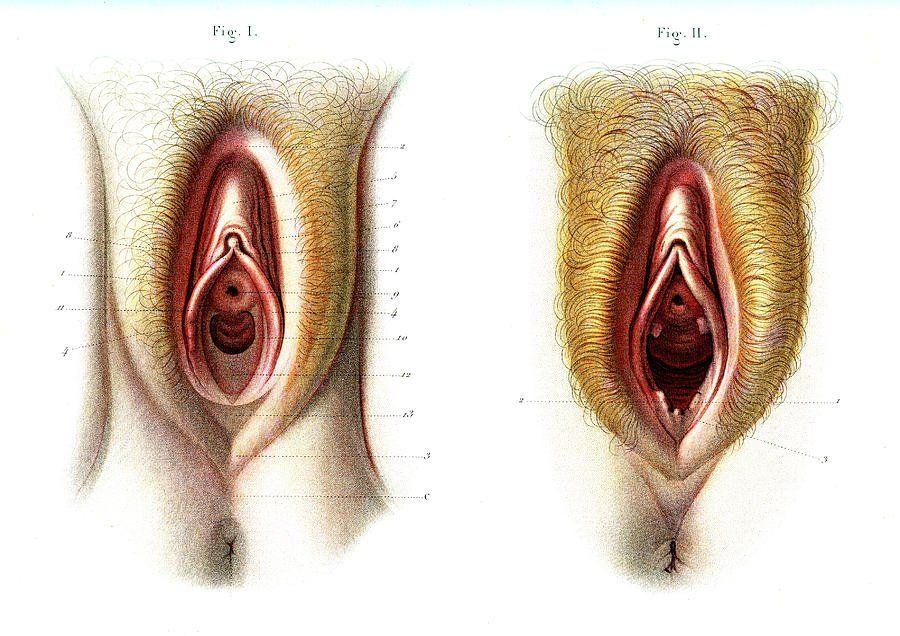 Nude Pix HQ Sex slave bondage videos